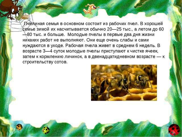 Пчелиная семья в основном состоит из рабочих пчел. В хорошей семье зимой их...