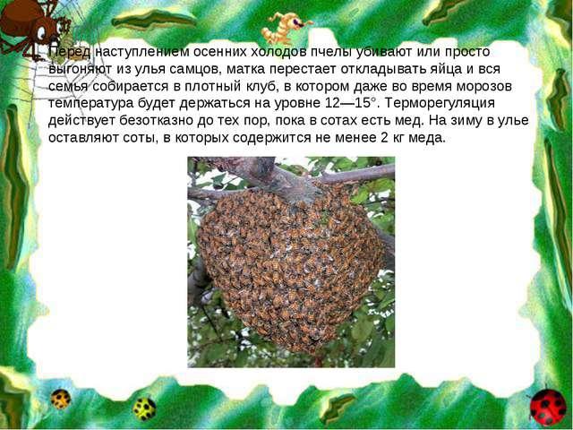 Перед наступлением осенних холодов пчелы убивают или просто выгоняют из улья...