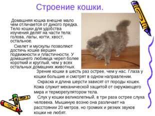Строение кошки. Домашняя кошка внешне мало чем отличается от дикого предка. Т