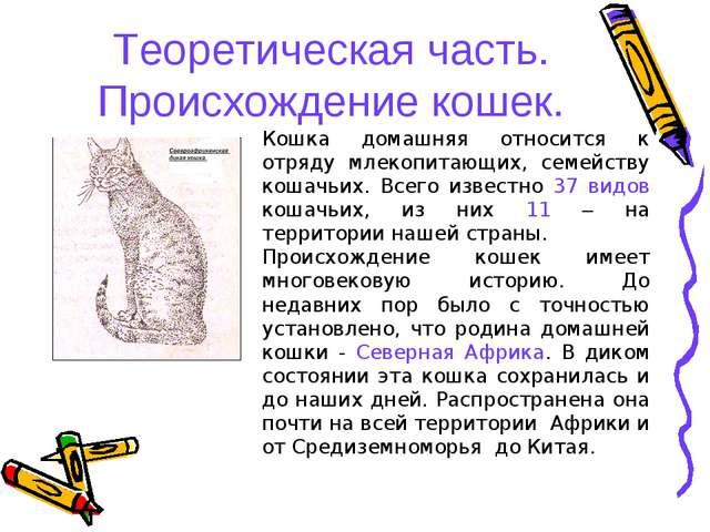 Теоретическая часть. Происхождение кошек. Кошка домашняя относится к отряду м...