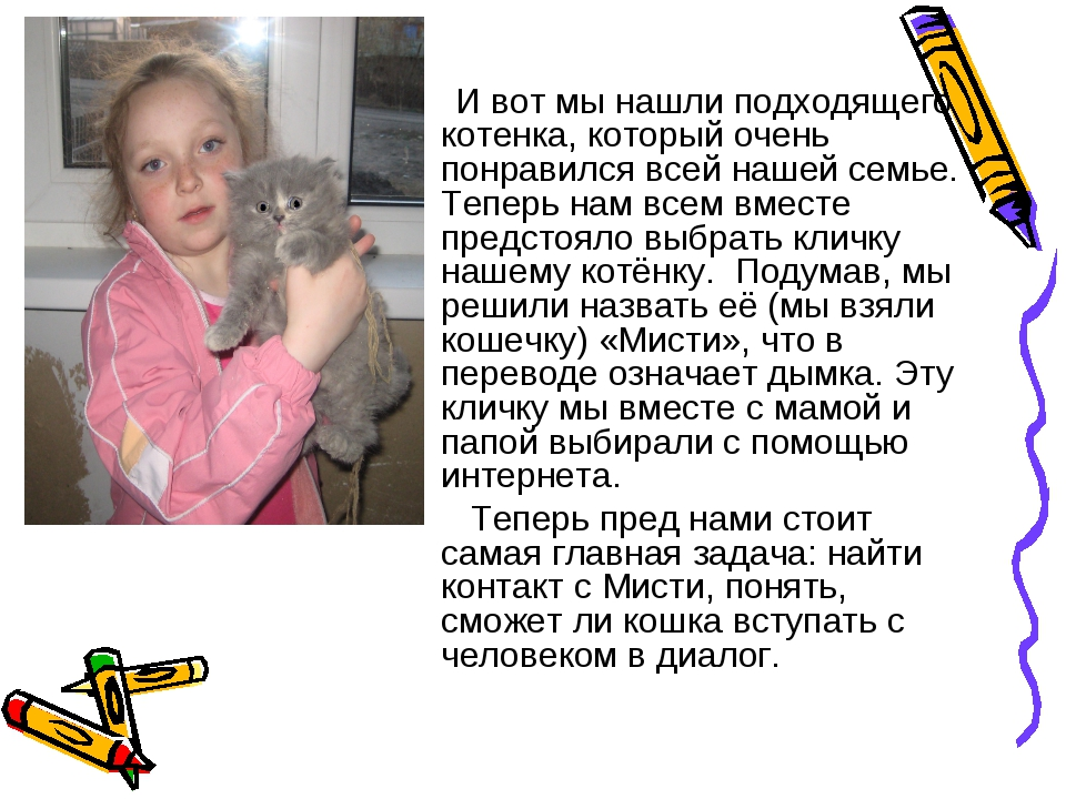 И вот мы нашли подходящего котенка, который очень понравился всей нашей семь...