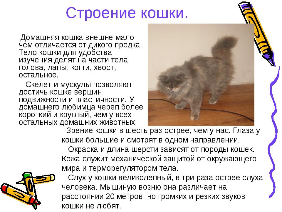 Строение кошки. Домашняя кошка внешне мало чем отличается от дикого предка. Т...