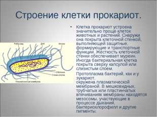 Строение клетки прокариот. Клетка прокариот устроена значительно проще клеток