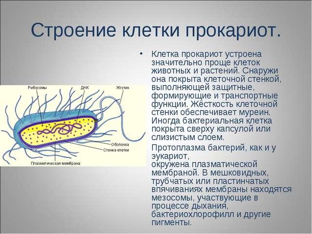 Строение клетки прокариот. Клетка прокариот устроена значительно проще клеток...