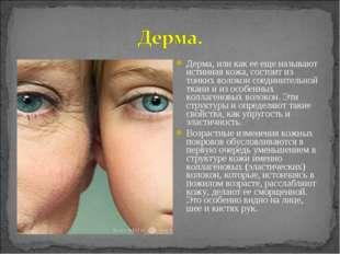 Дерма, или как ее еще называют истинная кожа, состоит из тонких волокон соеди