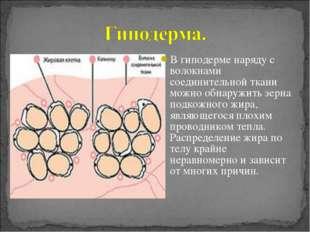 В гиподерме наряду с волокнами соединительной ткани можно обнаружить зерна по