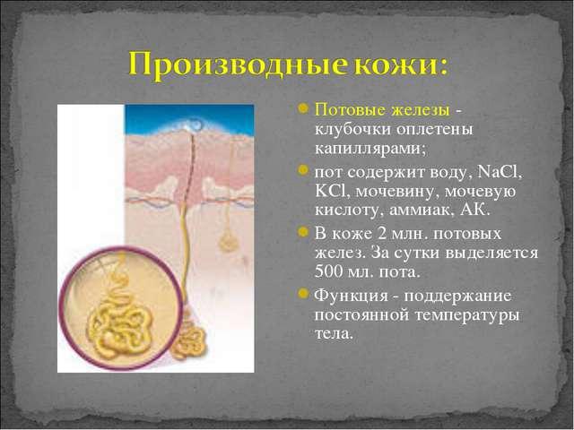Потовые железы - клубочки оплетены капиллярами; пот содержит воду, NaCl, KCl,...