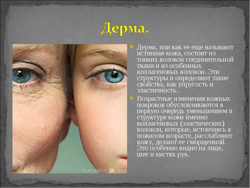 Дерма, или как ее еще называют истинная кожа, состоит из тонких волокон соеди...