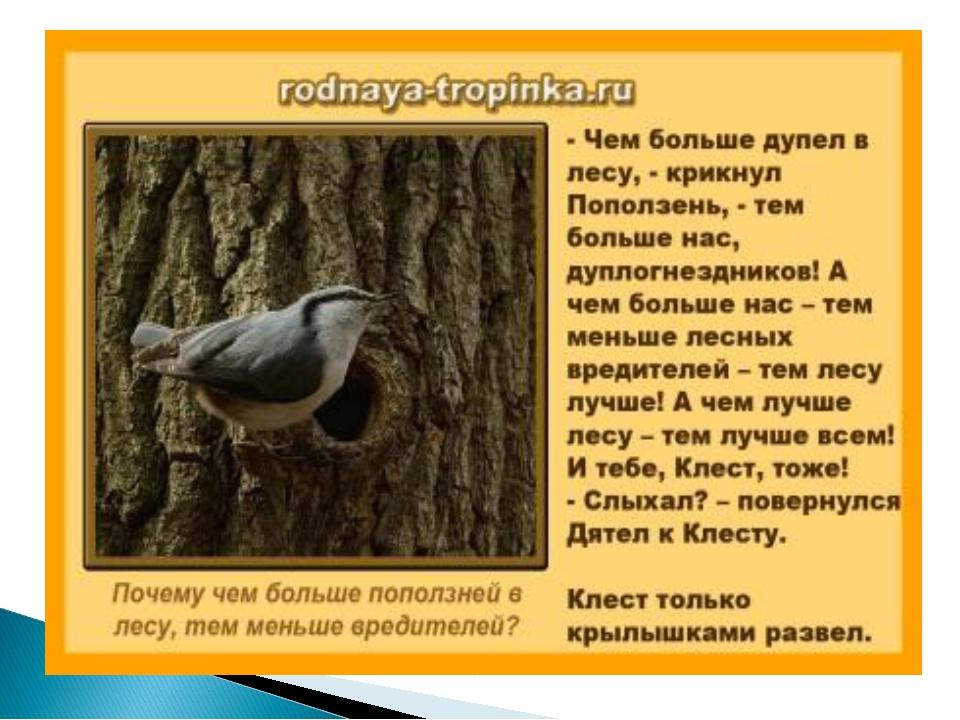 Почему рассказ сладкова называется серьезная птица