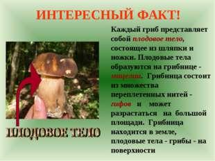 ИНТЕРЕСНЫЙ ФАКТ! Каждый гриб представляет собой плодовое тело, состоящее из ш