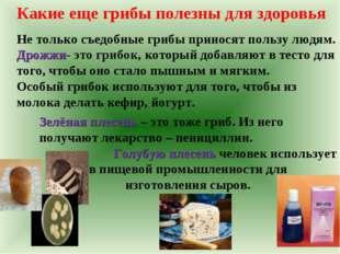Зелёная плесень – это тоже гриб. Из него получают лекарство – пенициллин. Гол