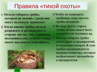 Правила «тихой охоты» 1. Нельзя собирать грибы, которых не знаешь. Среди них