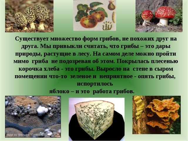 Существует множество форм грибов, не похожих друг на друга. Мы привыкли счит...