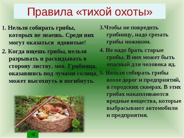 Правила «тихой охоты» 1. Нельзя собирать грибы, которых не знаешь. Среди них...