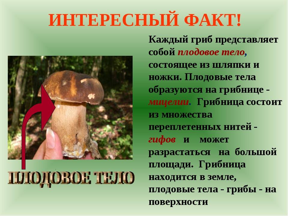 ИНТЕРЕСНЫЙ ФАКТ! Каждый гриб представляет собой плодовое тело, состоящее из ш...