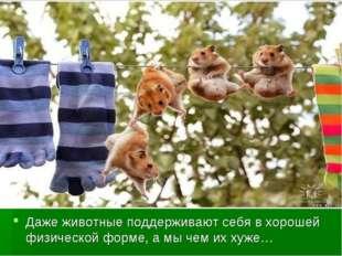 Даже животные поддерживают себя в хорошей физической форме, а мы чем их хуже…