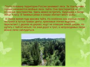Почти половину территории России занимают леса. За Уральскими горами начинаю