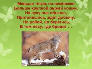 Меньше тигра, но немножко Больше крупной рыжей кошки. На суку она обычно, При