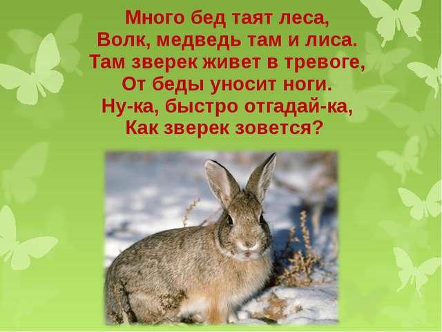 Много бед таят леса, Волк, медведь там и лиса. Там зверек живет в тревоге, От...