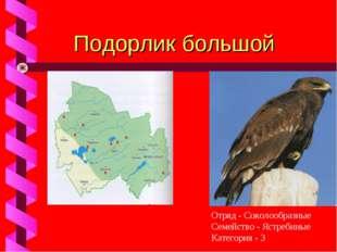 Подорлик большой Отряд - Соколообразные Семейство - Ястребиные Категория - 3