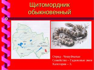 Щитомордник обыкновенный Отряд - Чешуйчатые Семейство – Гадюковые змеи Катего