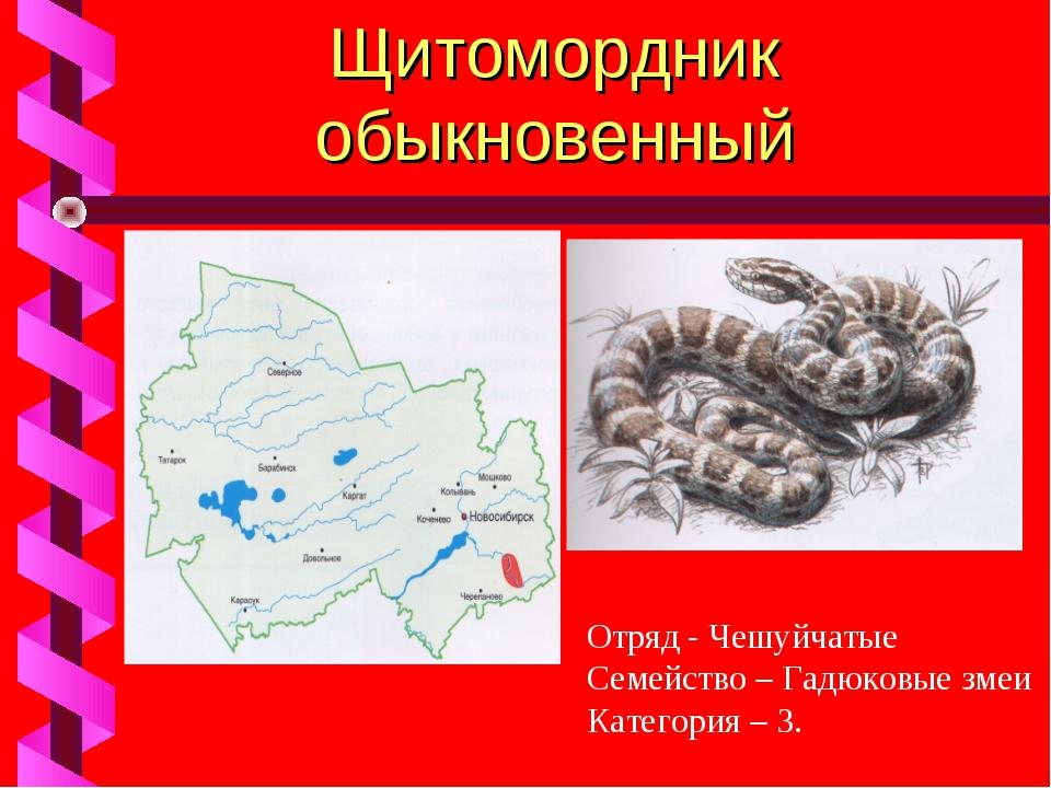 Щитомордник обыкновенный Отряд - Чешуйчатые Семейство – Гадюковые змеи Катего...