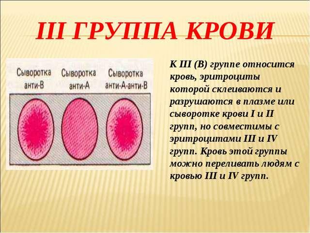 III ГРУППА КРОВИ К III (В) группе относится кровь, эритроциты которой склеива...