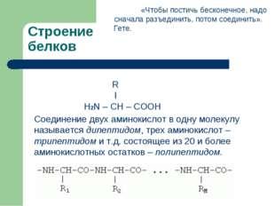 Строение белков Соединение двух аминокислот в одну молекулу называется дипепт