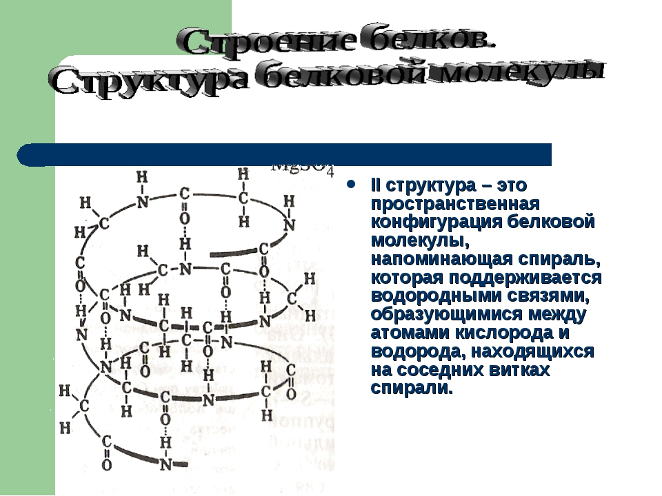 II структура – это пространственная конфигурация белковой молекулы, напоминаю...