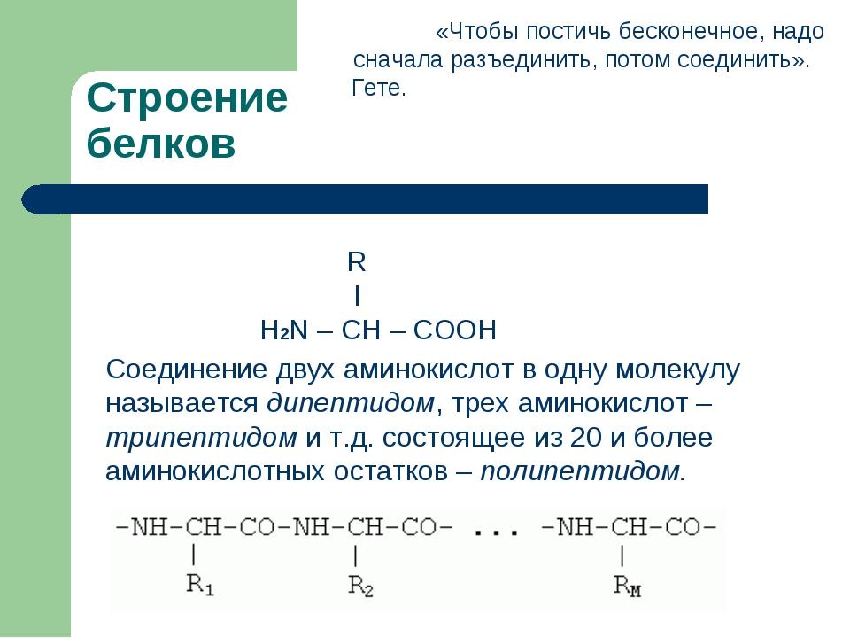 Строение белков Соединение двух аминокислот в одну молекулу называется дипепт...
