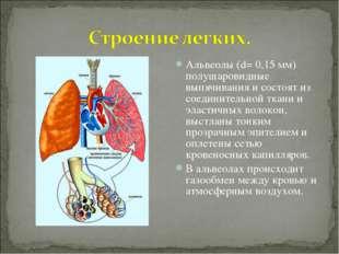 Альвеолы (d= 0,15 мм) полушаровидные выпячивания и состоят из соединительной
