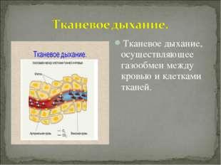 Тканевое дыхание, осуществляющее газообмен между кровью и клетками тканей.