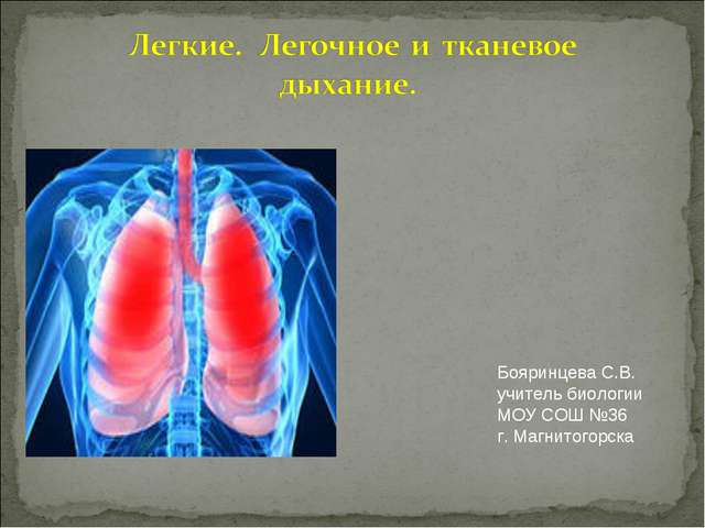 Бояринцева С.В. учитель биологии МОУ СОШ №36 г. Магнитогорска