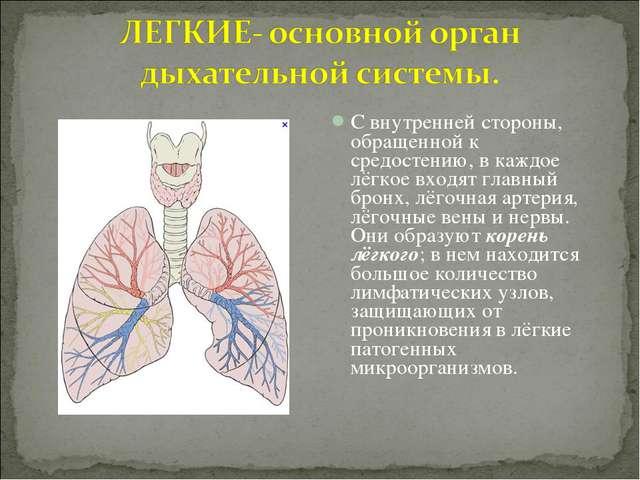 С внутренней стороны, обращенной к средостению, в каждое лёгкое входят главны...