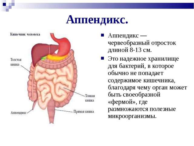 Аппендикс. Аппендикс — червеобразный отросток длиной 8-13 см. Это надежное хр...