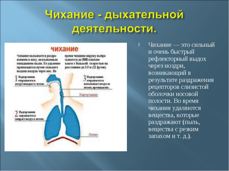 Чихание — это сильный и очень быстрый рефлекторный выдох через ноздри, возник...