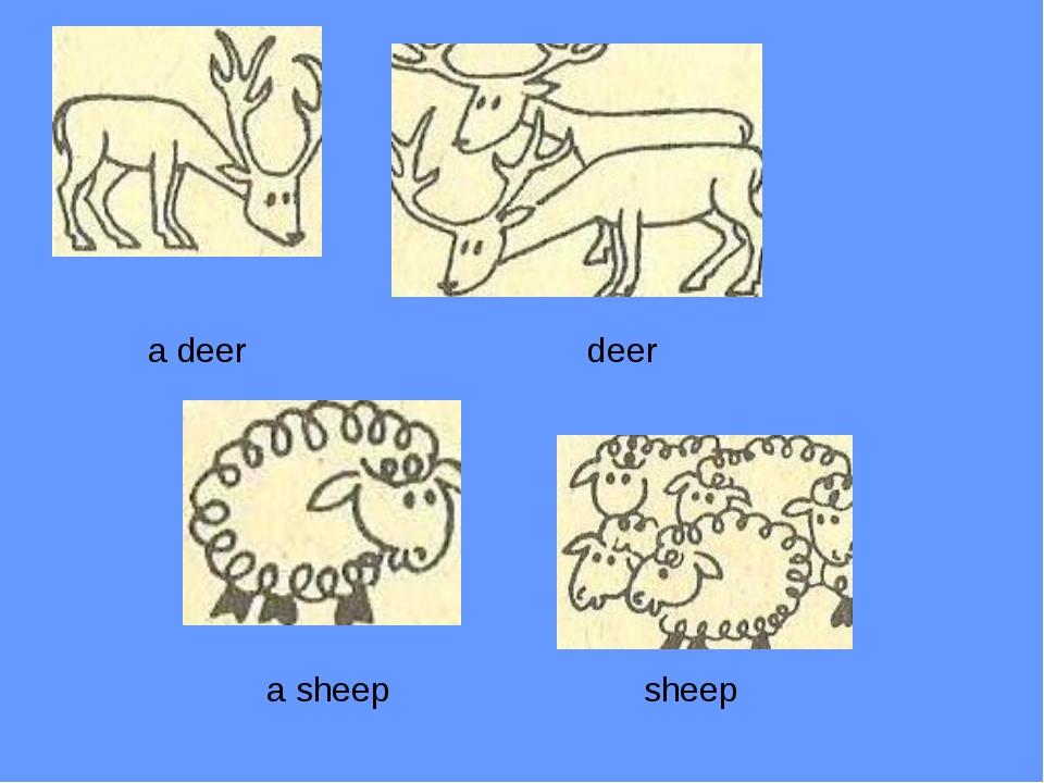 a sheep sheep a deer deer
