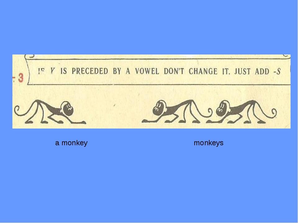 a monkey monkeys