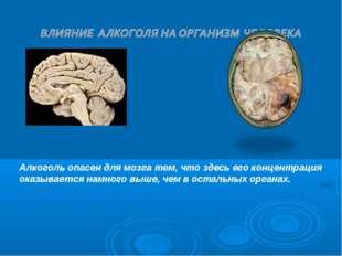 Алкоголь опасен для мозга тем, что здесь его концентрация оказывается намного