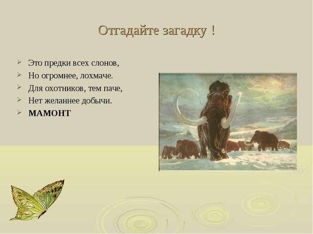 Отгадайте загадку ! Это предки всех слонов, Но огромнее, лохмаче. Для охотник...