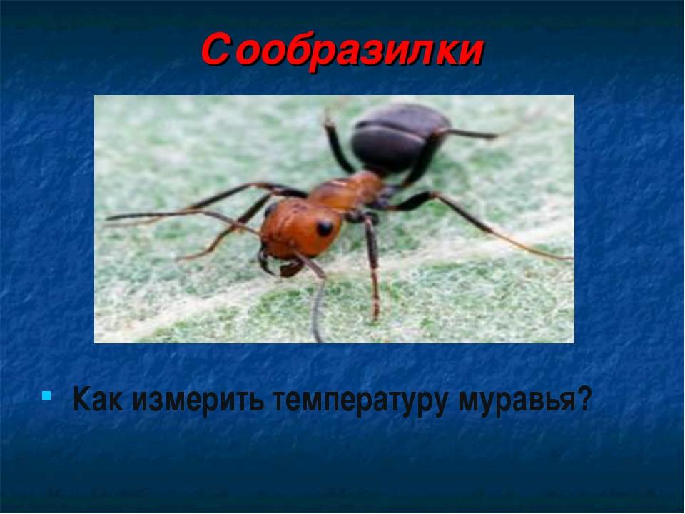 Сообразилки Как измерить температуру муравья?