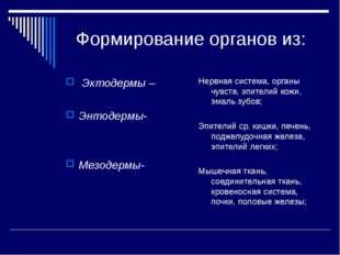 Формирование органов из: Эктодермы – Энтодермы- Мезодермы- Нервная система,