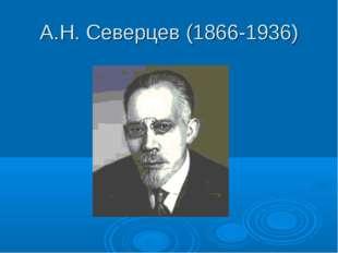 А.Н. Северцев (1866-1936)