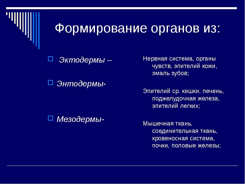 Формирование органов из: Эктодермы – Энтодермы- Мезодермы- Нервная система,...