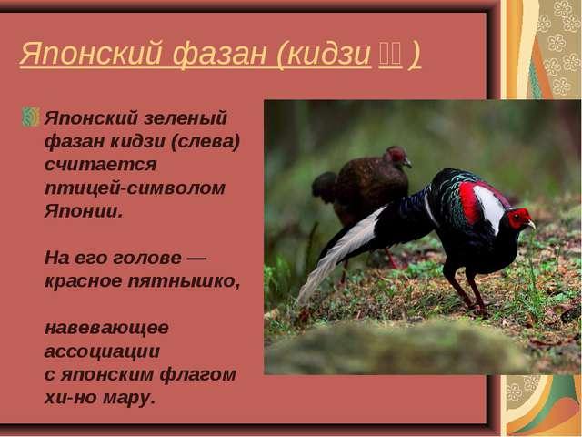 Японский фазан (кидзиキジ) Японский зеленый фазан кидзи (слева) считается пти...