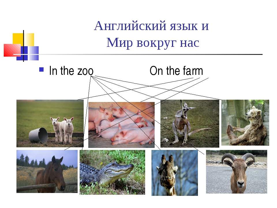 Английский язык и Мир вокруг нас In the zoo On the farm