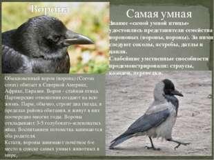 Самая умная Звание «самой умной птицы» удостоились представители семейства во