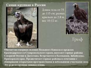 Длина тела от 75 до 115 см, размах крыльев до 2,8 м, вес 10-12 кг. Самая круп