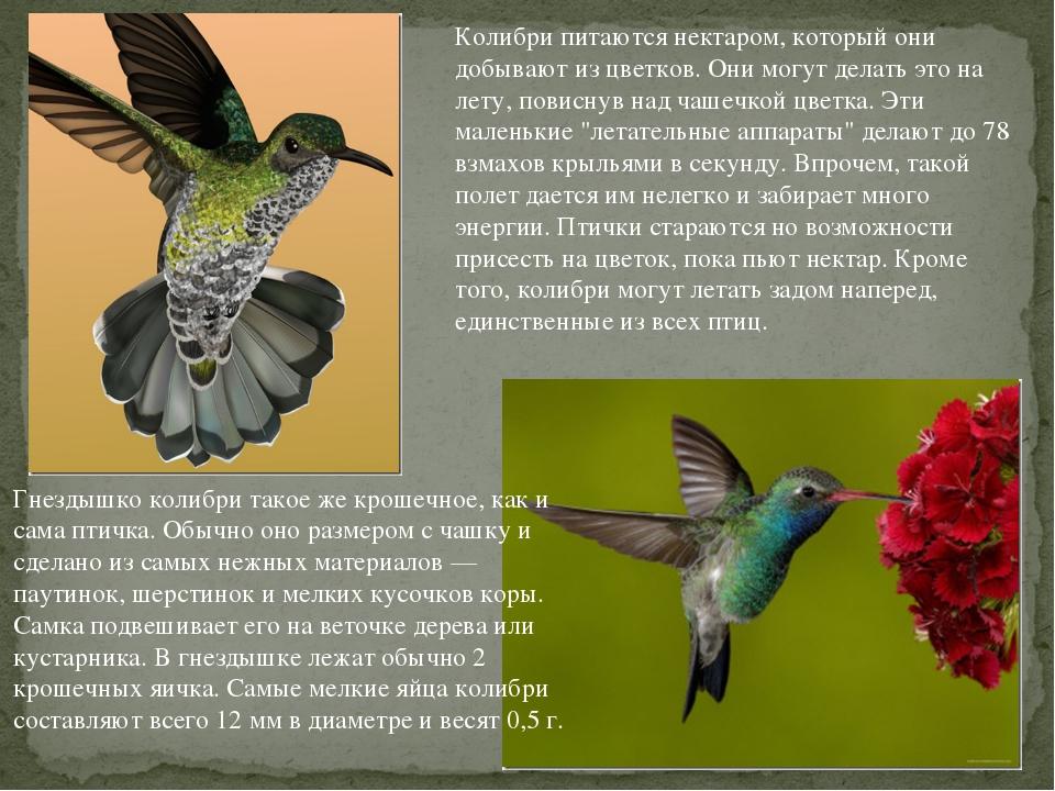 Колибри питаются нектаром, который они добывают из цветков. Они могут делать...