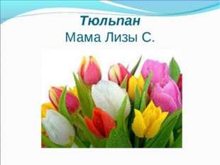 Тюльпан Мама Лизы С.